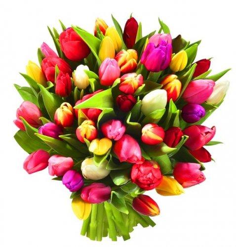 - kwiat1.jpg